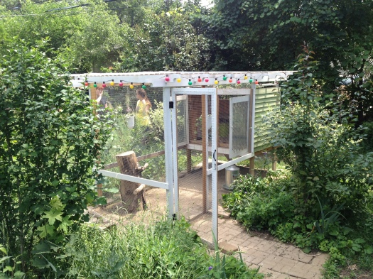 Laura's coop sits near the back of her yard, surrounded by native plants and trees.