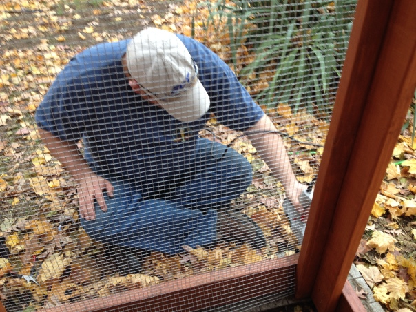 Matt staples hardware cloth (galvanized steel mesh) to the chicken coop.
