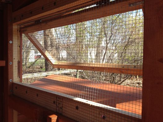 Mesh is installed on the bog coop window.