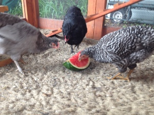 The girls enjoy a welcome-home watermelon.